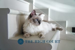 pet insurance statistics